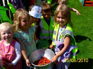 Fresh strawberries grown and picked ....... and eaten ! by the children in their little Tree House garden. How good is that !